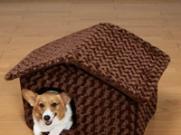 风水大师指点:家中宠物的安窝风水