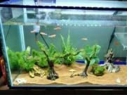 办公室鱼缸放在什么位置比较生财
