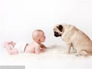属狗的宝宝如何取名_狗宝宝适宜用字